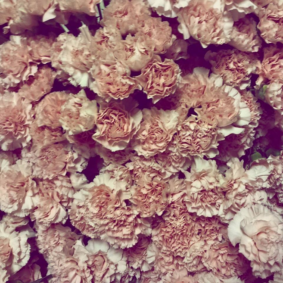 350 Pink Carnations from Gillespie Florists