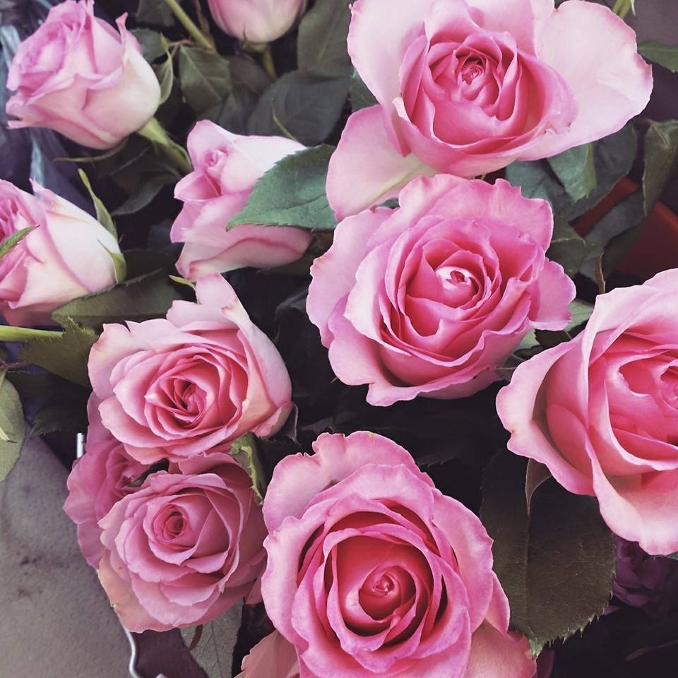24 Pink Roses from Rose's Bouquets